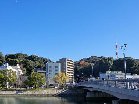 鶴見橋とシダレヤナギ