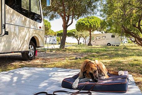 Kranker Hund auf einem Campingplatz schläft vor dem Wohnmobil, gut geschützt mit Camping-Reiserücktritts-Versicherung der ERGO