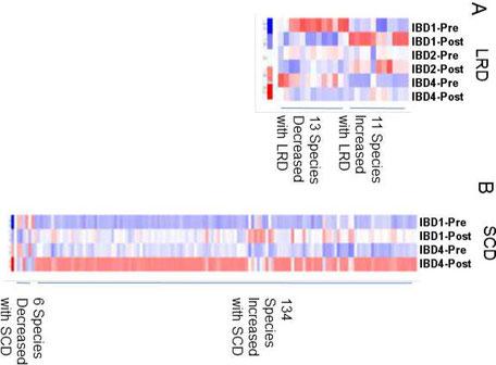 Grafische Darstellung der Verbesserung der gastrointestinalen Biodiversität durch die SCD-Diät: Eine Vermehrung von 134 bakteriellen Spezies innerhalb von wenigen Wochen!