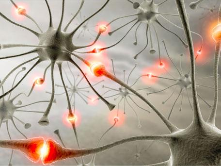 Synapsenbildung bei Nervenzellen - Neue Synapsen mit Life Kinetik bei Begle Balance