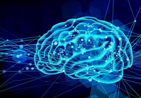 脳と神経系