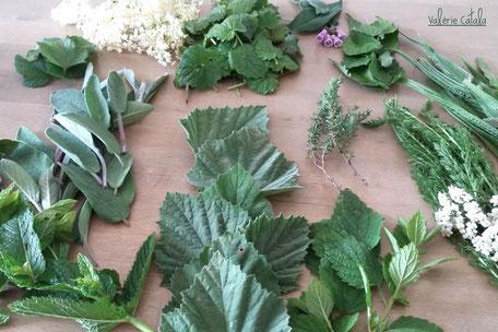 Ateliers savoirs faire a base de plantes médicinales recettes cueillette transformation cosmétiques baumes sirop tisanes macérats vitalité bien être