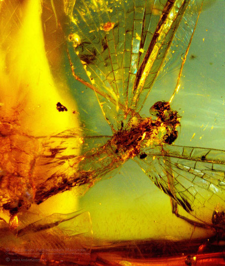 Inclusion in amber:  Ephemeroptera