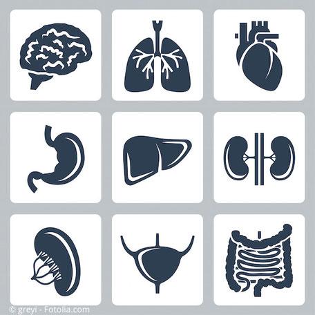 Quecksilber reichert sich in fast allen Organen und Geweben an.
