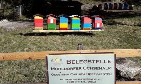 Mühldorfer Ochsenalm, Nähe Mühldorf, Belegstellenbetreiber: Bezirksverband für Bienenzucht Spittal/Drau, www.carnica-oberkaernten.at