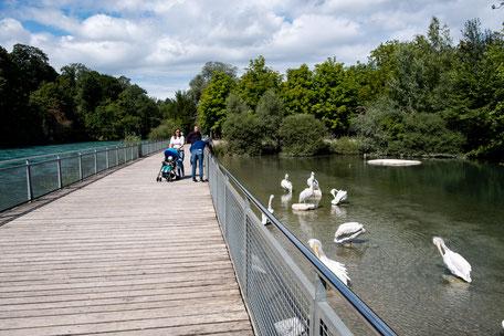 Pelikanteich neben dem kinderfreundlichen Tierpark-Restaurant