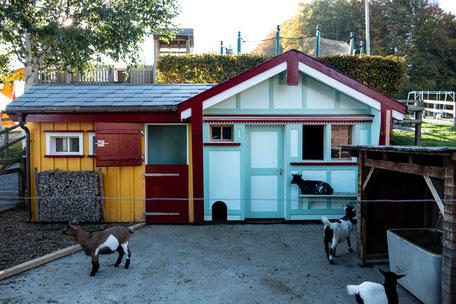 Familien-Restaurant Waldegg mit Minizoo