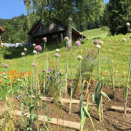 Atelier-Café Daniel Gisler Garten Naturgarten Gemüse Salat Lauch Krinau Toggenburg Ostschweiz Bernhard Tinner Gärtner