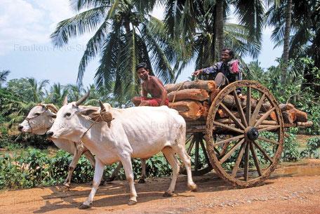 Rinderkarren in INDIEN