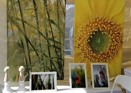 Ausstellung Rosenmarkt Mössingen