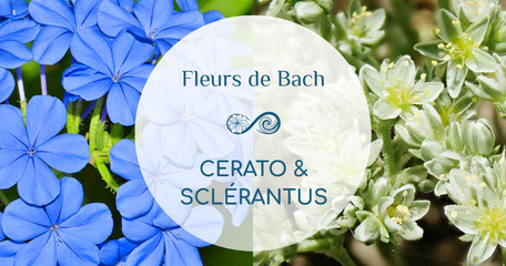 Annie Attal | Fleurs de Bach - Crab Apple