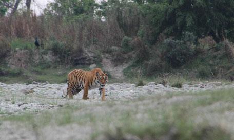 Warum ich Nepal so liebe...