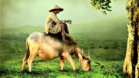 Fernreisen Vorschläge Vietnam