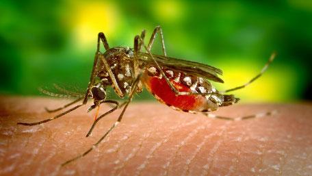 Fernreisen Insider Tipps Malaria