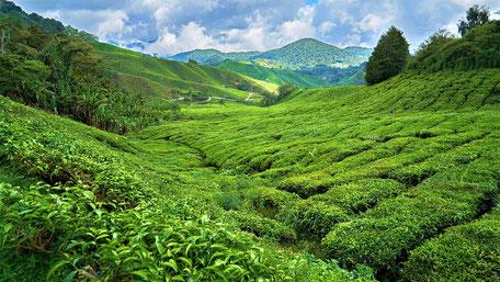 Fernreisen Vorschläge Malaysia und Singapur