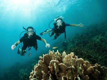Marine life Conservation Thailand Volunteers