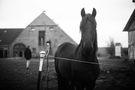 Elektrozaun, Pferdehaltung
