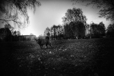 LATVIA / Riga / From the book 'Auftakt'. Evil dog in Victory Park, 30.04.2010