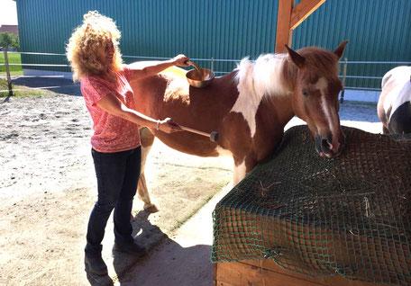 Iris Form behandelt ein Pferdes mit Klangschalen