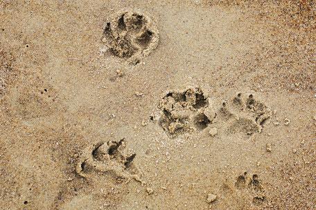 Dogwalking in Augsburg, Zirbelhunde