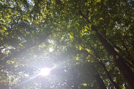 Wildfulness - Auszeit im Wald