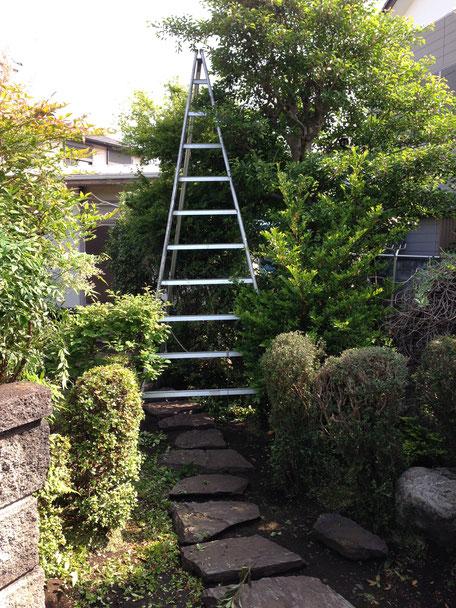 伸び放題となっていたお庭の植木/庭木たちが剪定作業後は見違えるほどきれいに