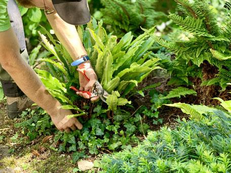 Gartenunterhalt, Gartengestaltung, Bepflanzung, Heckenschnitt, Gärtner Basel