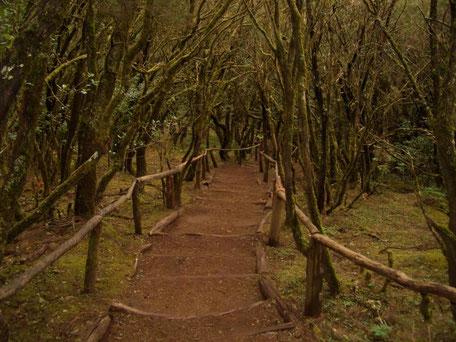 Wanderweg im Parque Nacional de Garajonay