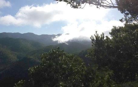 Nationalpark Garajonay La Gomera