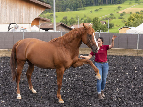 Hands.on.Horses.Osteopathie.für.Pferde.Baselland.Lea.Gauthier