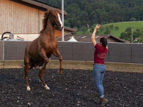 Hands.on.Horses.Osteopathie.für.Pferde.Baselland