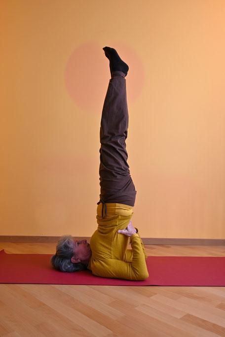 Der Impuls für die schwerelose Aufrichtung in den Schulterstand  (sārvangāsana) entspringt in der Brustwirbelsäule auf Herzhöhe und fließt über den entspannten Bauchraum in die Beine hinein. Kopf und Schultern ruhen entspannt am Boden.