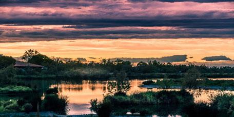 Parc Ornithologique du Pont de Gau: Oiseaux de Camargue