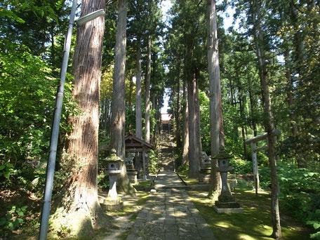 春日神社の杉木立の参道の画像