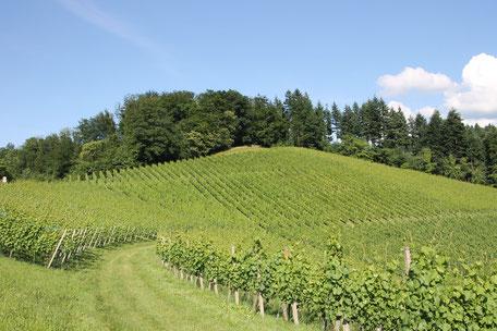 Ihre Wanderung kann direkt von der Ferienwohnung in Gengenbach aus starten.