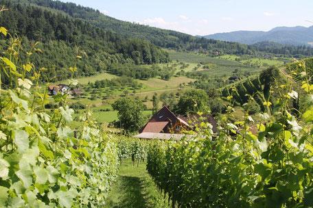 Unser Winzerhof und unsere Ferienwohnung in Gengenbach sind umgeben von Reben und Schwarzwald