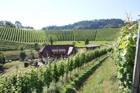 Die Ruhe durch die besondere Lage der Ferienwohnung in Gengenbach umringt von Weinberger bietet Erholung pur
