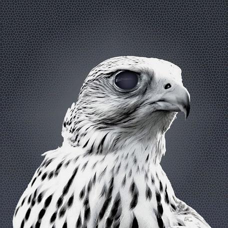 Kunstwerk: White Falcon