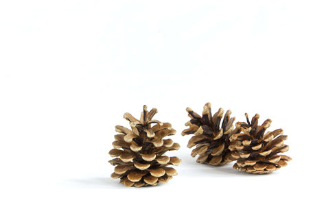 10 Plus Pine Cone Crafty Decor DIY Ideas