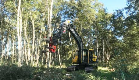 Forest cutter