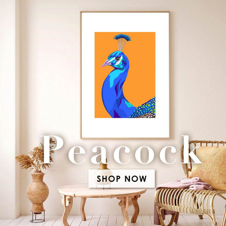 colorful peacock illustration