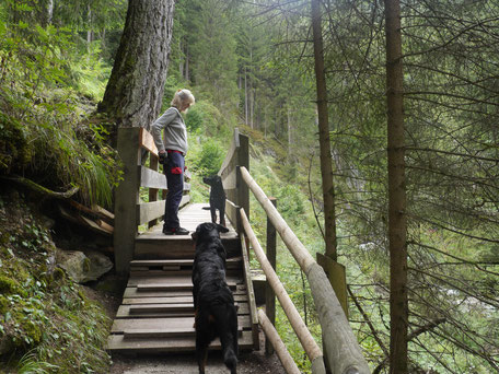 Hunde klettern im Gilfenklamm