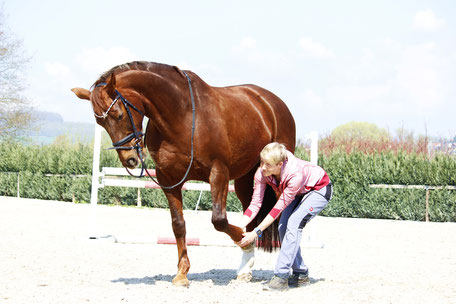 Dr. Laura Klingseisen-Bruun mit Pferd bei Physiotherapie der Vorderhand dehnen