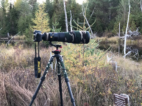 Nikon D750 mit Nikkor 500/f4 VR auf einem Uniqball UBH 45 mit Gitzo Systematic Serie 4 Stativ