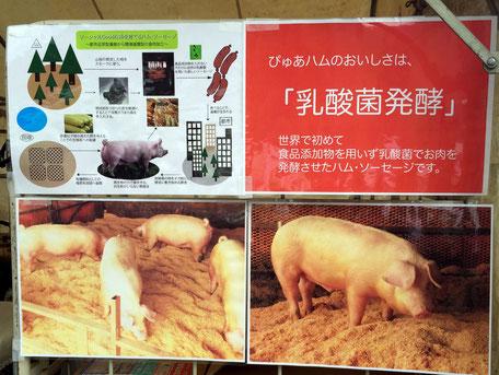 株式会社湘南ぴゅあの平井三郎さん。つくる工程や、豚舎の様子が掲示されている。ちなみに、「湘南ぴゅあポーク」は中ヨークシャー種の交配種で、豚肉の全流通量の0.1%程度と、大変貴重な品種だ。豚肉特有の臭みが無く、深みのある味わいが特徴だ。