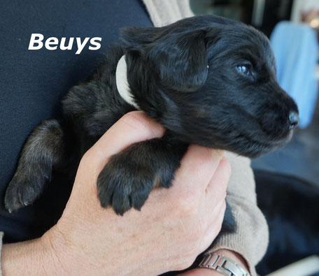 Beuys - nach dem Aktionskünstler Joseph Beuys