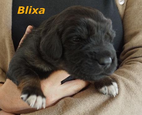 Blixa - galizischer weiblicher Vorname