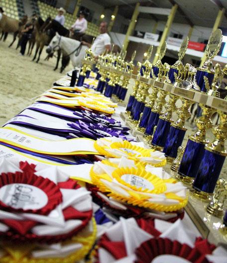 Von 18. bis 20. August 2017 finden auf der Reitanlage in Stadl Paura diverse Landesmeisterschaften im Westernreiten statt sowie das Finale der OÖ Series 2017. Foto: Reit- und Fahrverein Desselbrunn