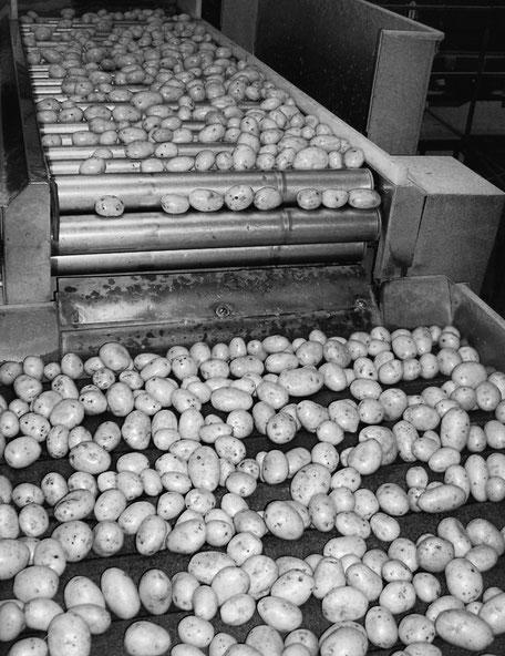 EARL Andreau Laprée Sarl des Estuaires Meursac producteur pomme de terre tomate Charente-Maritime consommateur exploitation agricole qualité