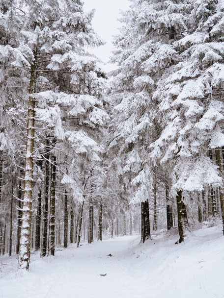 Oberursel, Taunus, Frankfurt, Taunus Nature Park, Winter, Snow